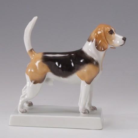 Hund Beagle